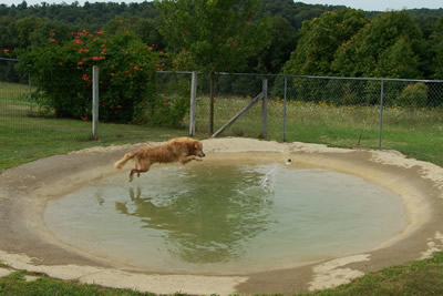 camp creek farm kennel concrete pond